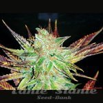 MEDICAL SEEDS - Prozack