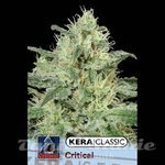 KERA SEEDS - Critical