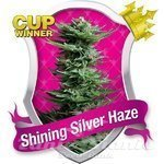 ROYAL QUEEN SEEDS - Shining Silver Haze®