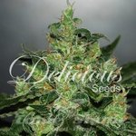 DELICOUS SEEDS - Critical Jack Herer Auto