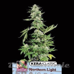 KERA SEEDS - Northern Light