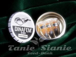 DINAFEM - Collectors Pack Nº 25